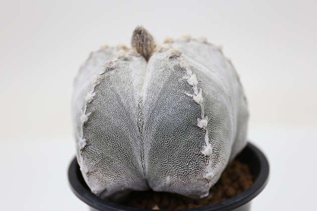 サボテン 多肉植物