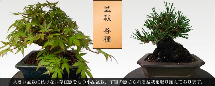 盆栽 各種