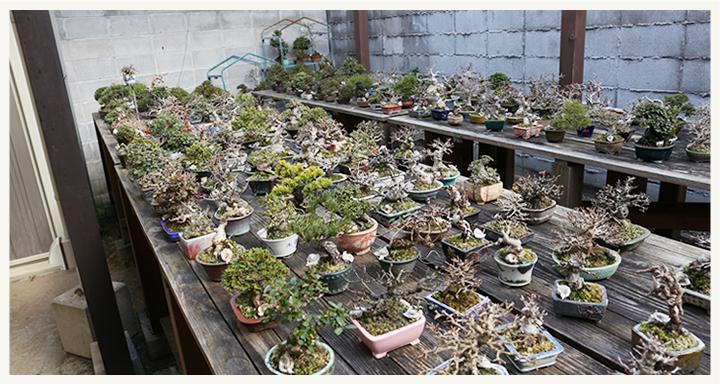 盆栽・サボテン・多肉植物