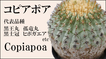 コピアポア