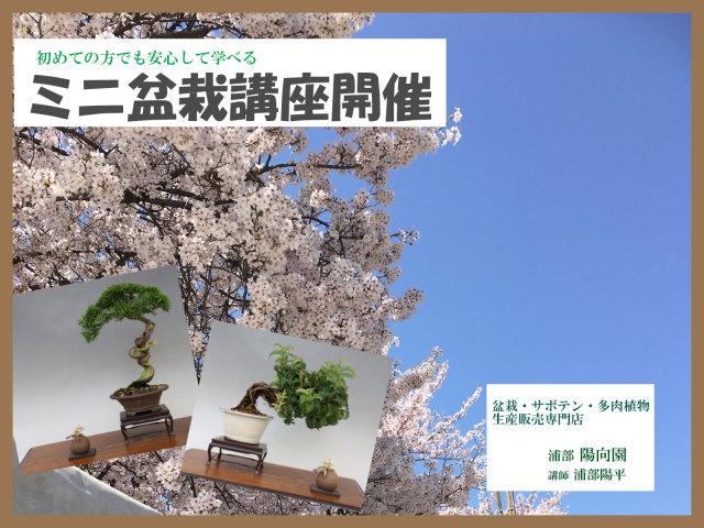 盆栽教室画像