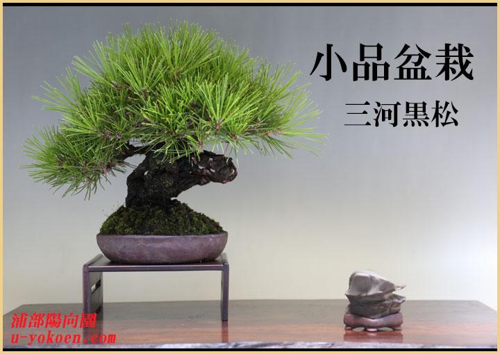 三河黒松-2バナー