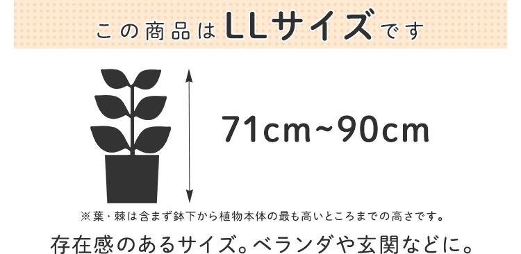 LLサイズ