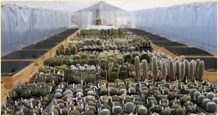 盆サボテン・多肉植物ハウス内風景