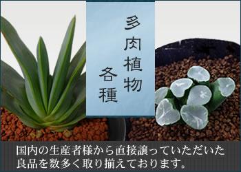 多肉植物 各種